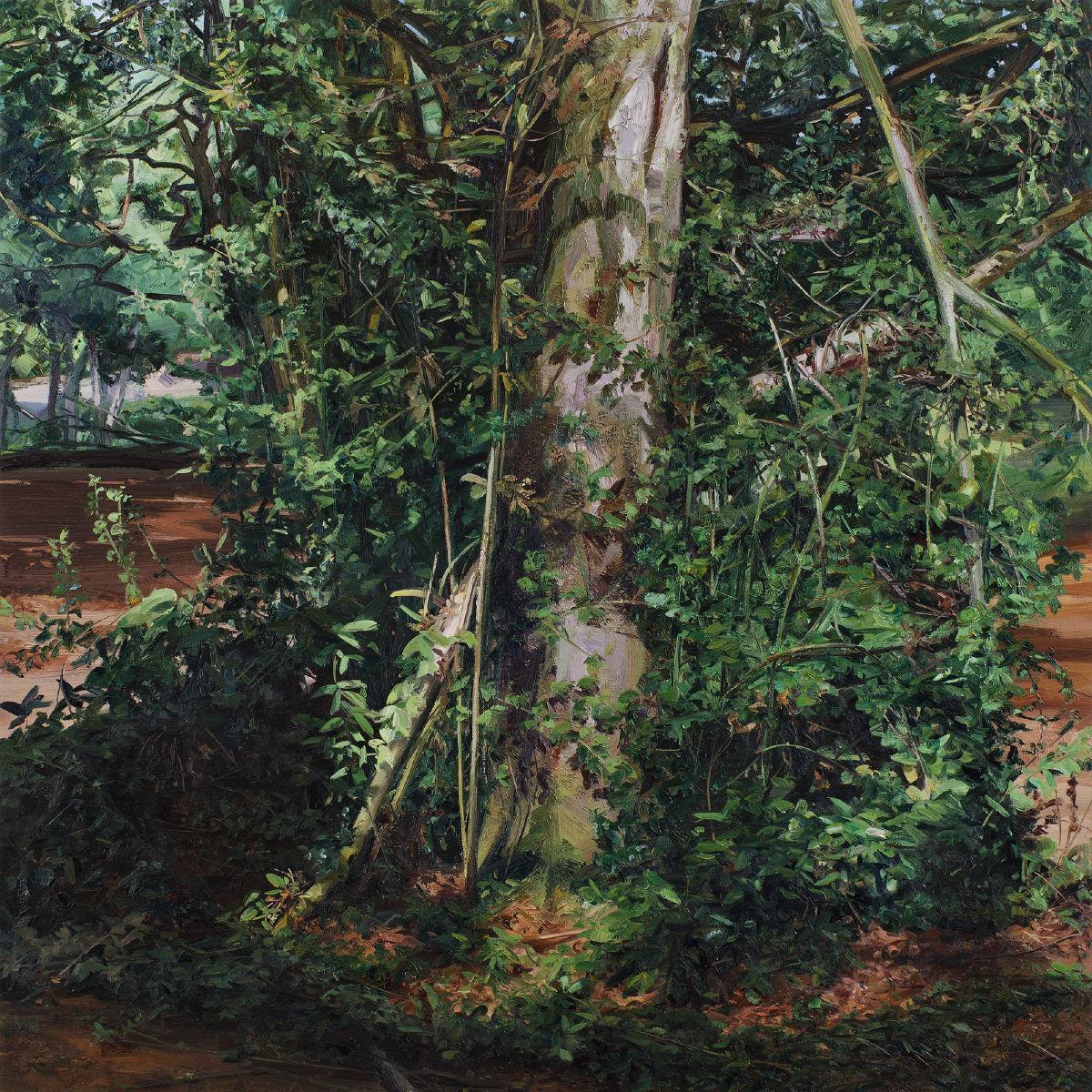 Mass - Tree