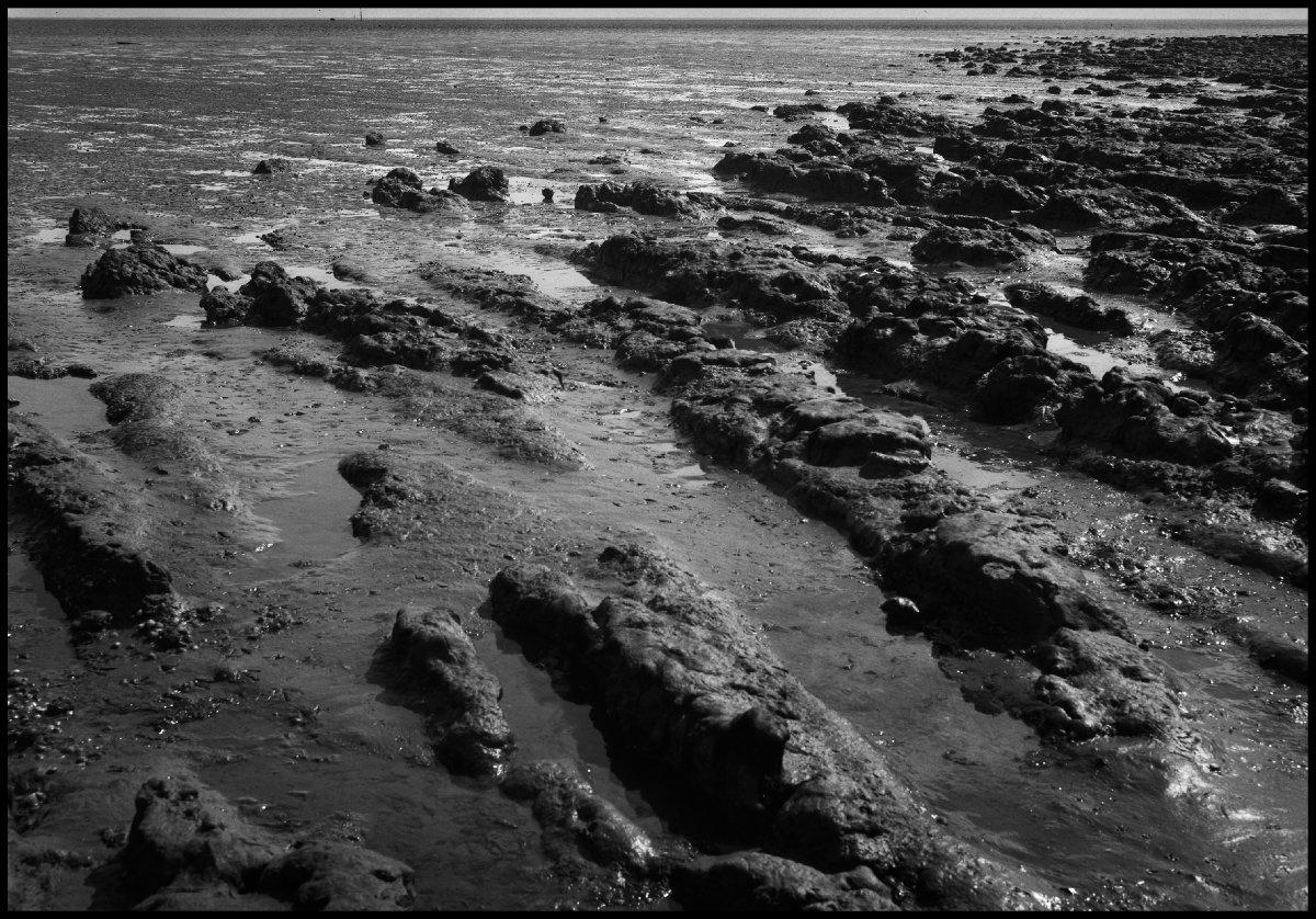 Salt mud on the Dengie Peninsular